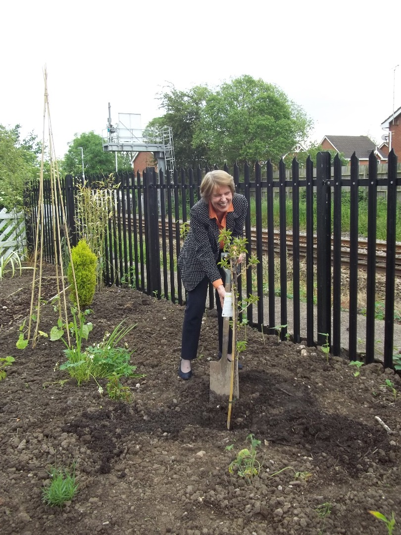 Anna Walker Chair ORR helps out at Uttoxeter station heritage garden